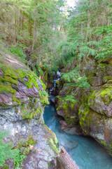 MT-Glacier National Park-Avalanche Creek