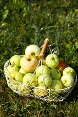 Ripe apples in basket on grass