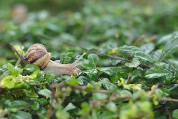 Snail on the tree