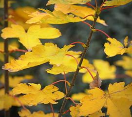 automne ...arbre