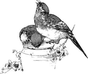 Vintage Illustration little birds