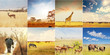 Fototapete Afrikanisch - Tier - Säugetiere