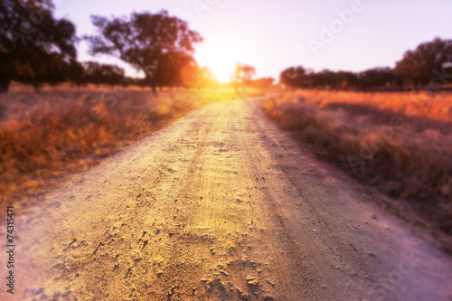 Foto op Canvas Weide, Moeras Road in field