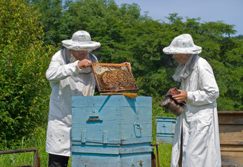 Beekeepers at hive 14