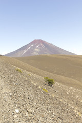 Lonquimay and tolhuaca volcano, Chile