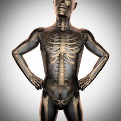 human radiography scan  with bones