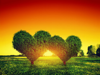Heart shape trees couple on green field at sunset. Love