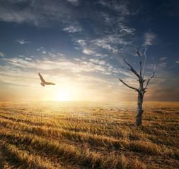 Dry tree in autumnn field