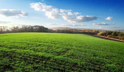 Field of winter crops