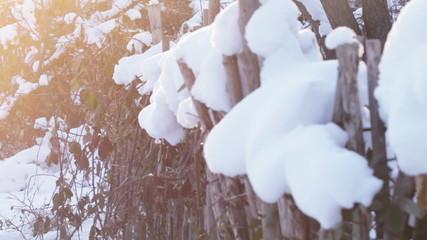 Wooden fence under snow