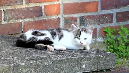 junge Katze auf dem Bauernhof