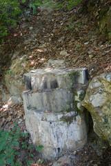 Petrified Forest - Bulgaria