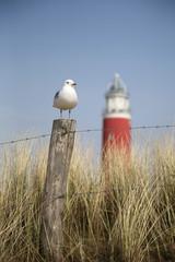 Lighthouse Cocksdorp