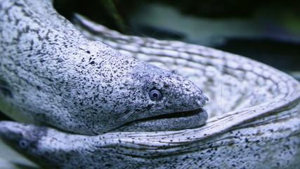 moray eel in the aquarium