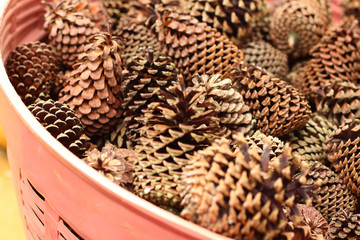pine cones in a basket at the garden