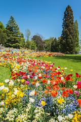 Blumen und Bäume