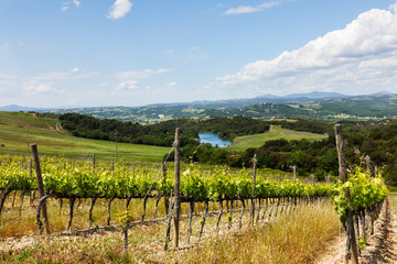 Summer rural landscape with vineyards and lake in Tuscany, Italy