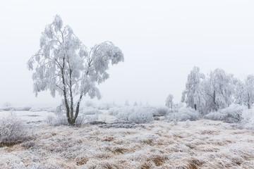 Winter im Hohen Venn (monschau)