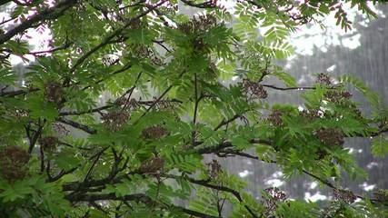 Rain in nature