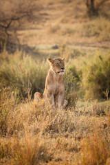 leone alba tanzania