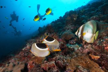 Divers underwater exploring coral reef in ocean