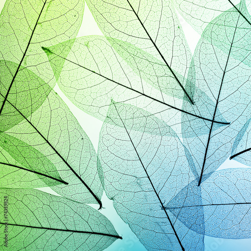 Macro leaves background texture - 74339824