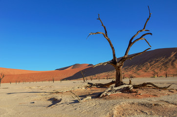 Trees and landscape of Dead Vlei desert, Namibia, South Africa