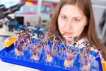 woman study of genetic modified GMO plants in the laboratory