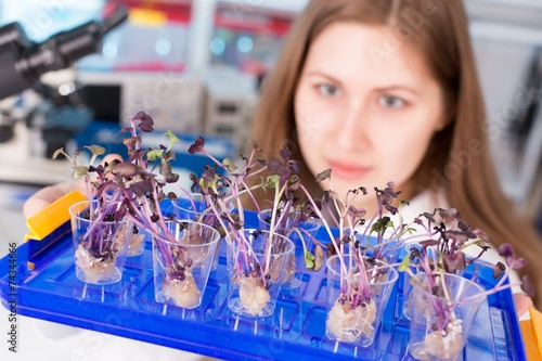 canvas print picture woman study of genetic modified GMO plants in the laboratory