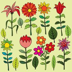Various summer flowers.