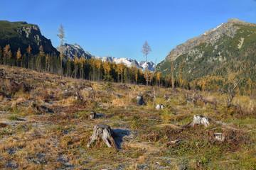 Clear cutting in Tatra Mountain, Slovakia