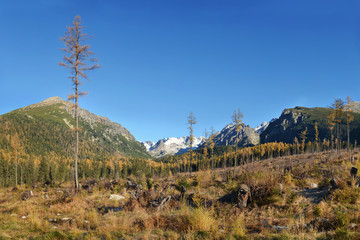 Clear cutting in Tatra Mountain, Slovakia