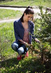 Woman in garden cleans bush