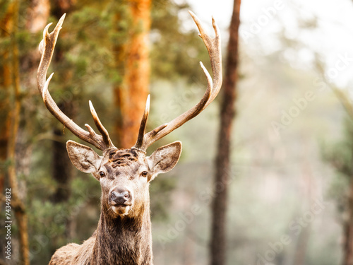 Foto op Plexiglas Hert Red deer stag in autumn fall forest
