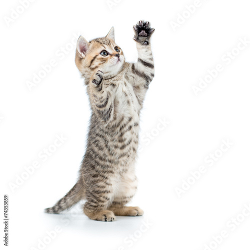 Valokuva playful funny kitten looking up. isolated on white background