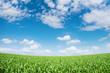 Vibrant green meadow