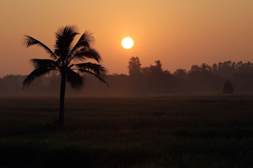 Coconut trees and paddy fields in silhouette.