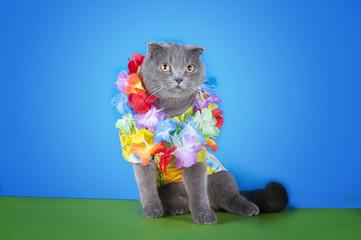 cat in a Hawaiian shirt