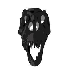 skull fossil Dinosaur