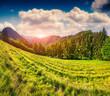 Beautiful summer landscape in the italian alps.
