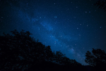 Milky Way Above Trees