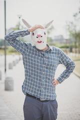 rabbit mask absurd man