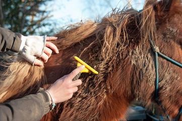 Pony winter maintenance