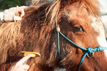 Brushing a dirty pony