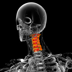 3d render medical illustration of the neck bone