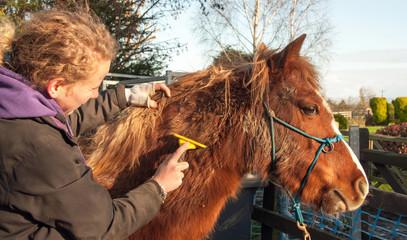Winter grooming
