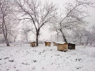 Ule w zimie