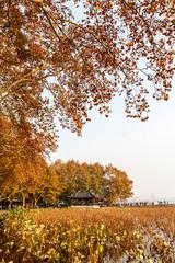 Hangzhou west lake Broken Bridge autumn scenery