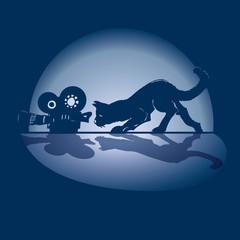Katze, Kamera und Film