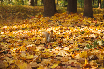 autumn park, squirrel